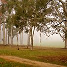 Gum trees surrounded by fog at Beechworth by Elana Bailey
