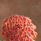 Protea by Kim Roper
