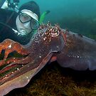 The Cuttle Whisperer. by James Peake