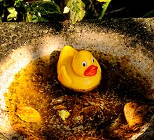 A Rubber Duck in my Bird bath. by Karen  Betts