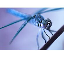 Alien Dragonfly Photographic Print