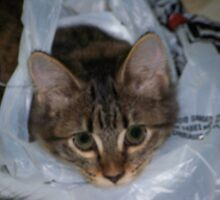 khloe and  shopping bag by gabbielizzie