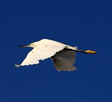 Flight of the White Egret by Virginia N. Fred