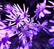 Fantasy in Purple... by maxy