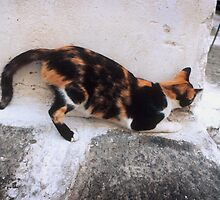 Playful Greek Calico by Yuri Lev