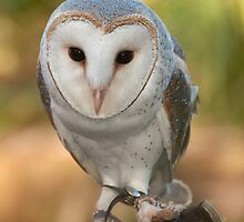 """Skye"" the Barn Owl by rflower"
