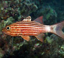 Cardinalfish by cooperscuba