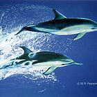 Leaping Dolphins by Dolfinguy