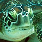 Green Turtle by cooperscuba