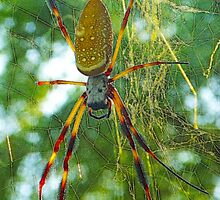 Golden Silk Orbweaver by Luann Gingras