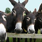 Donkeys! by Mike Paget