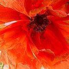 Red Enamel by Fay270