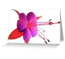 'Spring Ballet Series - Fuschia Tutu' Greeting Card