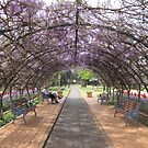 Two people inside the Wisteria tunnel at Laurel Bank Park, Toowoomba,Qld. Australia by Marilyn Baldey