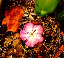 Lonely Upside Down Flower by shybaby50