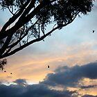 Sunset by Jodie Bennett