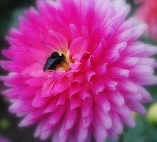 Bumble Bee Dahlia by Karen Ashenberner