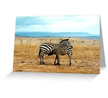 Zebra mare and foal Greeting Card