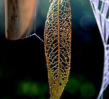 Autumn Leaf by Simon Hackney