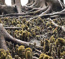 Mangroves by Olivia  Gray