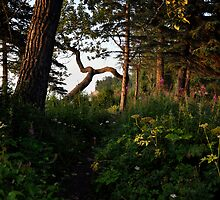 The Silent Garden by Barbara Burkhardt