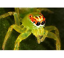 Green Jumping Spider Photographic Print