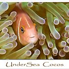 UnderSea Cocos by Karen Willshaw