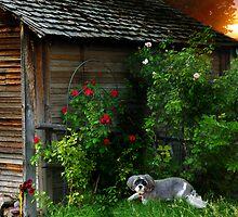 The Old Barn (and Ruffy Joe) by digitalmidge