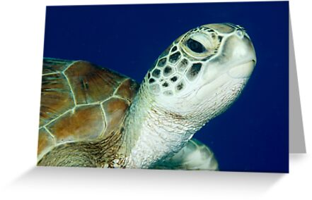 Hello ~ Green Turtle by Karen Willshaw
