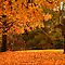 The lamp post in autumn in Bright by Elana Bailey
