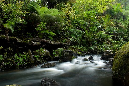 Small stream in the Waipoua Forest by Paul Mercer
