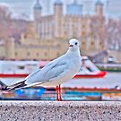 Seagul  by dhphotography