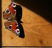Vlinder by Micky McGuinness