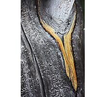 melting wooden gold: golden necklace around a silver neck Photographic Print