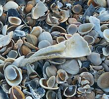 Seashells, Seashells! by Caren