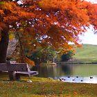 Autumn colors in Mclarens park by Paul Mercer