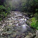 Small stream near the Cascade, South Westland by Paul Mercer