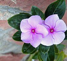 flowers by Matt Eagles