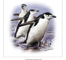 CHINSTRAP PENGUIN 2 by DilettantO