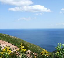 Cape Breton - Golden Rod by Lady-Di