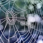 The web by Sheri Nye