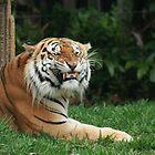 Fierce Feline by ahobbs77