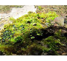 Garden in Miniature Photographic Print