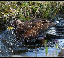 Splish splash I am having a bath!! by Shaun Whiteman