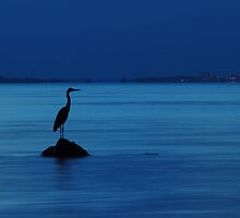 The evening heron by jchanders