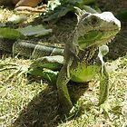 Iguana Papa by SplatterPics
