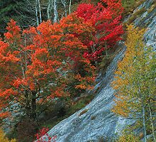 AUTUMN COLORS by Chuck Wickham