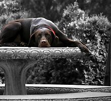 DOG DAYS by Lori Deiter