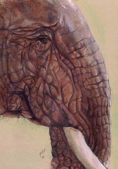 Elephant by Sarah  Mac