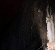 THE HORSE REFUGE  by scarletjames